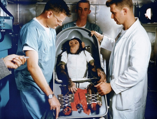Ham the chimp being told that he must go to space before he can have any more banana drugs